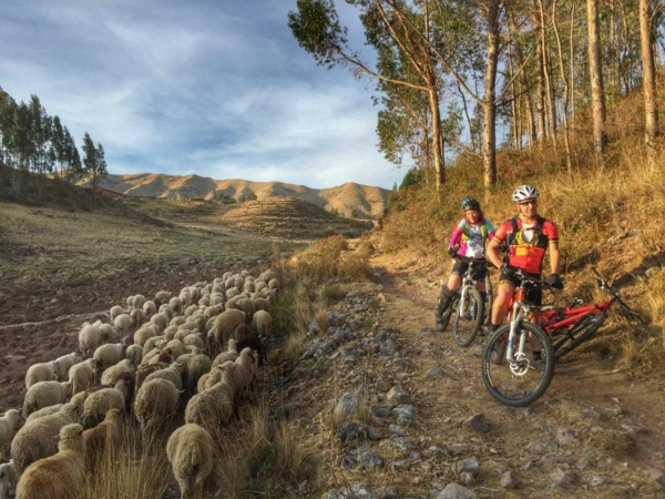 Three mountain bikers sitting on bikes on a rocky path with a herd of sheep walking past them on the left