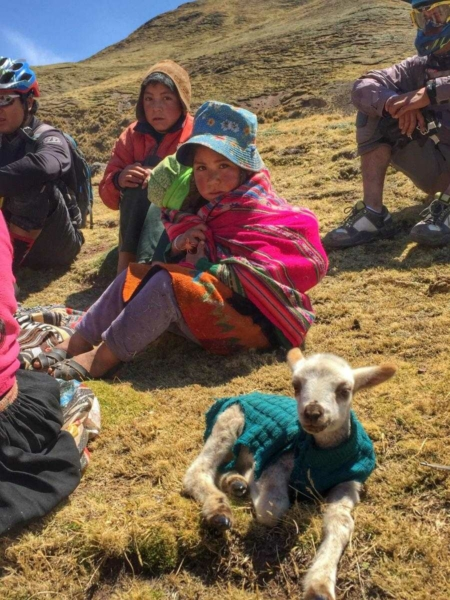 A couple mountain bikers and a couple young Peruvian children sitting on a grassy hillside with a baby alpaca in a green sweater lying next to them