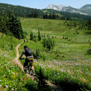 Mountain biker riding a narrow trail through a grass covered field with mountain peak in the distance