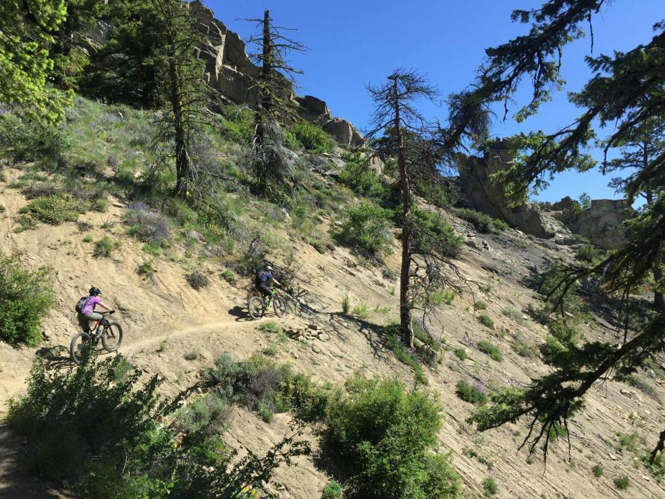 Two people riding mountain bikes horizontally across steep dirt slope of mountain dotted with evergreens