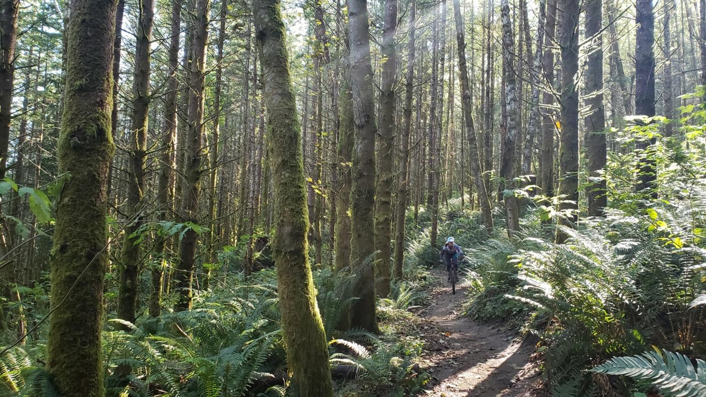 sun streaks through hemlocks on mountain bike tour at raging river Washington state