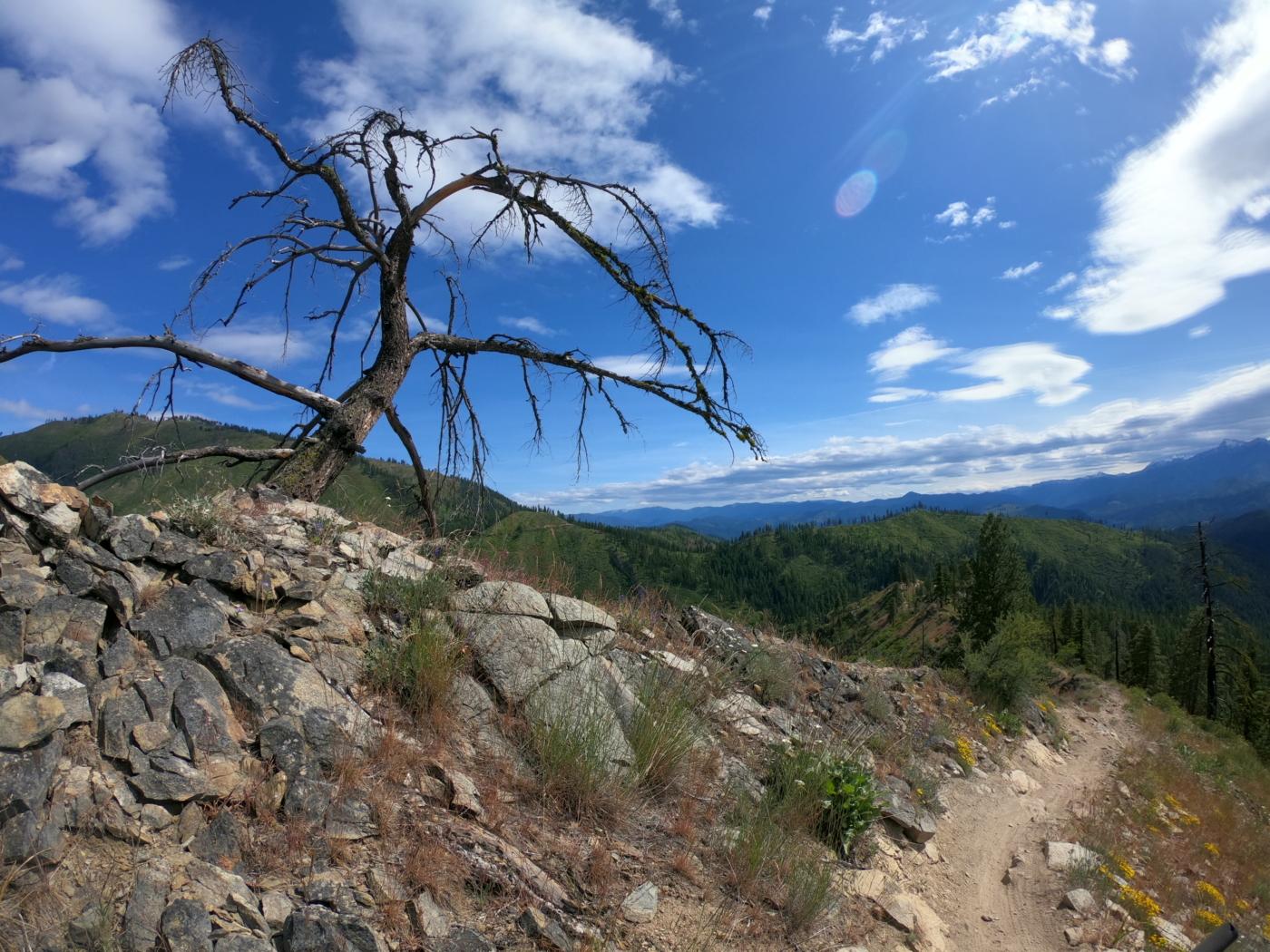 tigh single track in washington state singletrack mountain bike tour cascadie